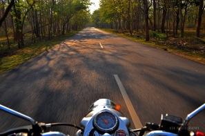 Bandipur forest