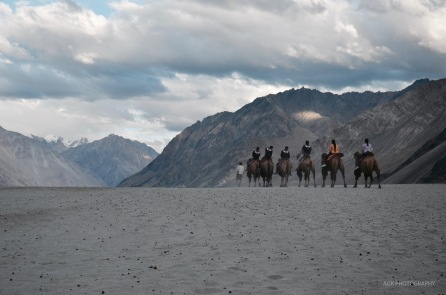 Camel riding at Nubra valley
