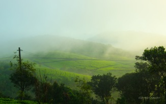 Tea plantations covered with mists